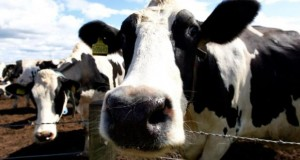 The investment will give the Irish Dairy Board a central hub to access the important dairy growth markets in the Middle East, North African (MENA) region. Photograph: REUTERS/David Moir