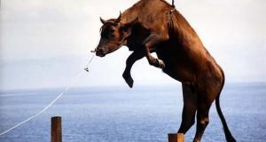 animal-transport
