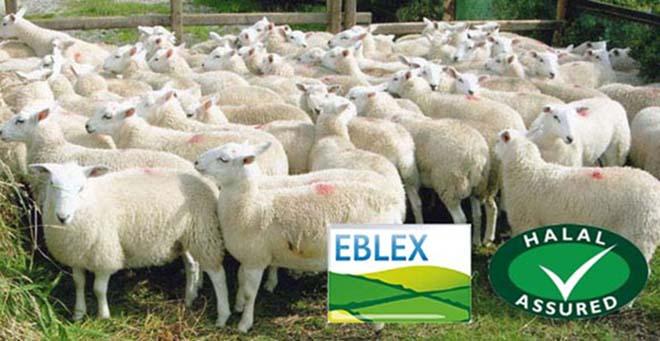 eblex-halal-assurance-scheme