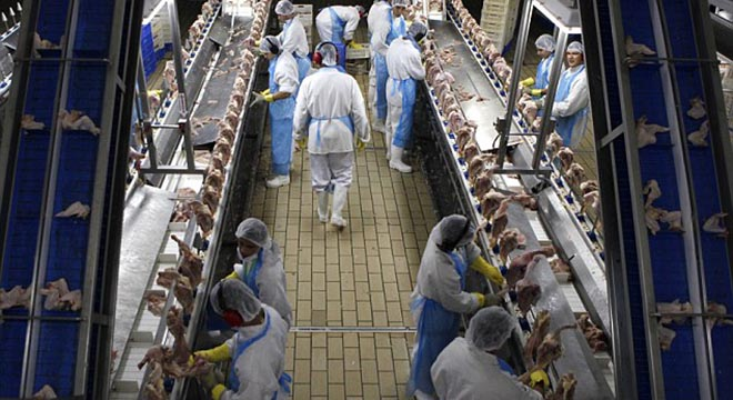 Workplace: Chickens are processed at a slaughterhouse near Sao Paulo, Brazil, which are then 'tumbled' in the UK, repacked and sold at some supermarkets.