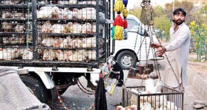Saudi Arabia may lift ban on Pakistani poultry