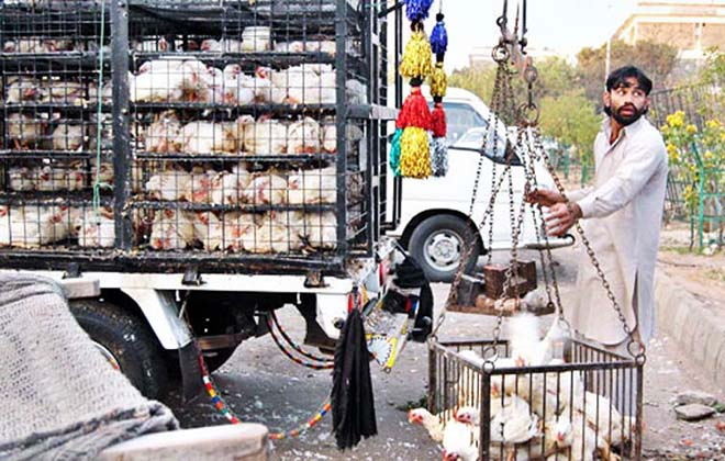 Saudi Arabia may lift ban on Pakistani poultry